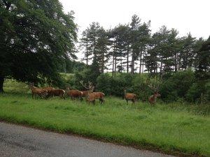 Wildlife in Lyme Park